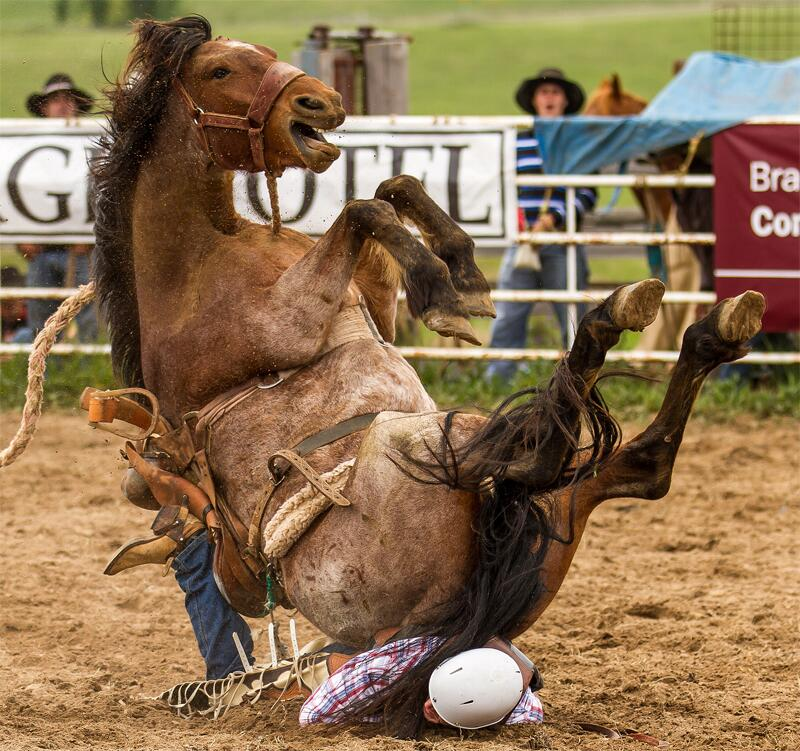 Bild zu Rodeo