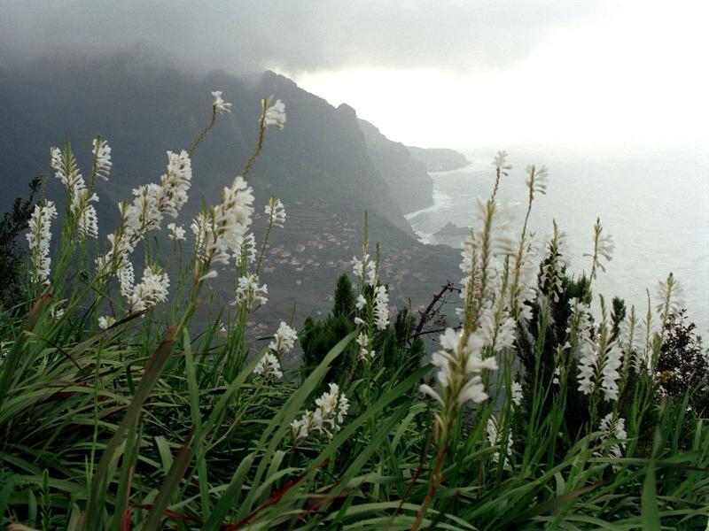Bild zu Urlaubsland Madeira