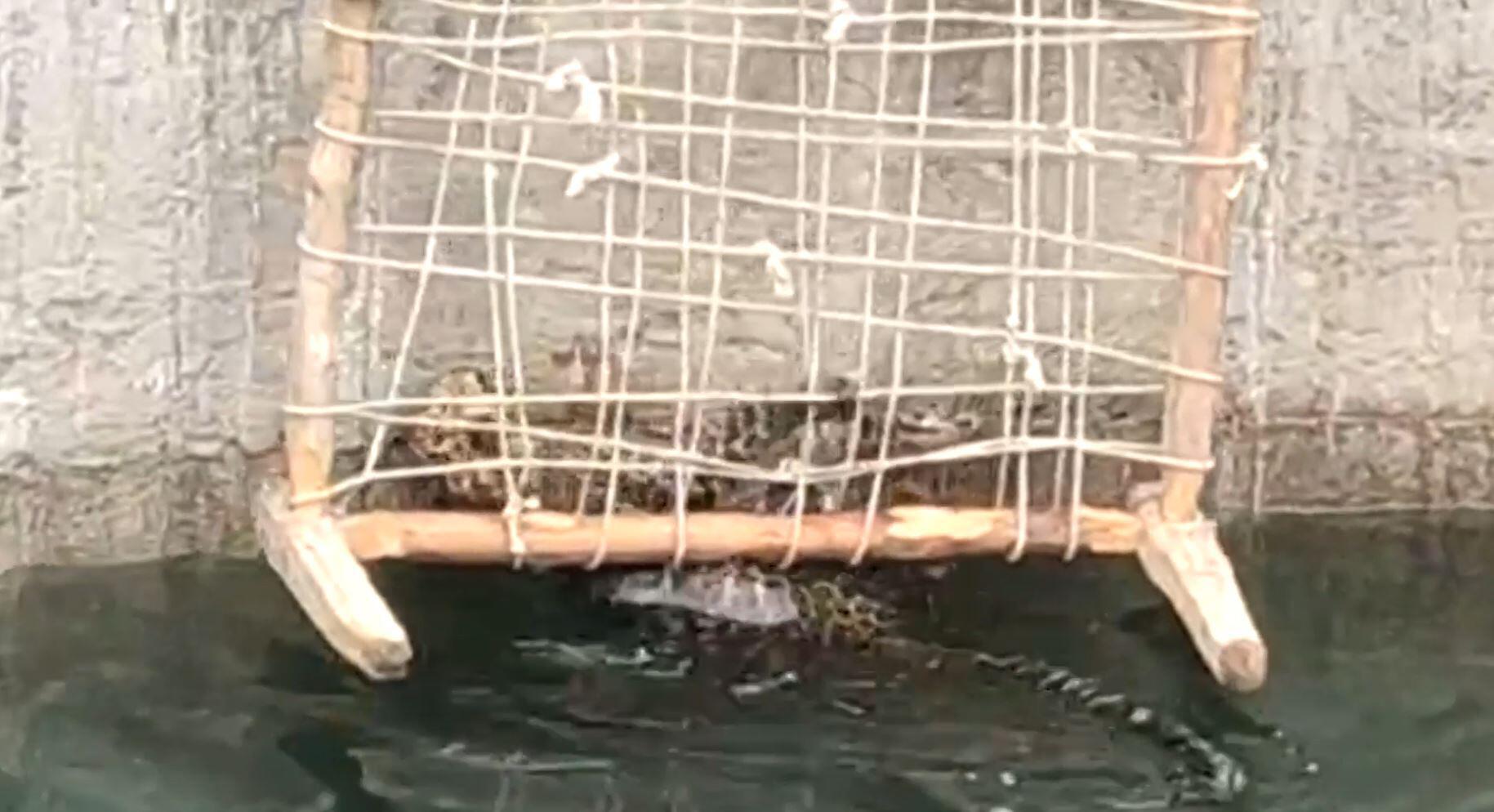 Bild zu Leopard wird gerettet