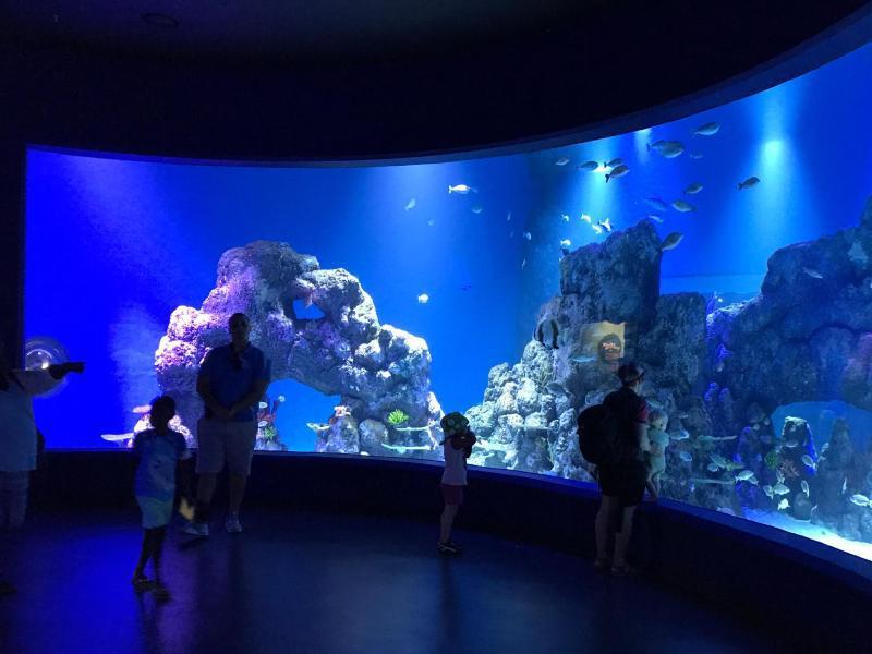 Bild zu Cairns Aquarium & Reef Research Centre