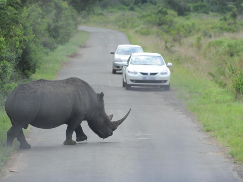 Bild zu Safari in Südafrika