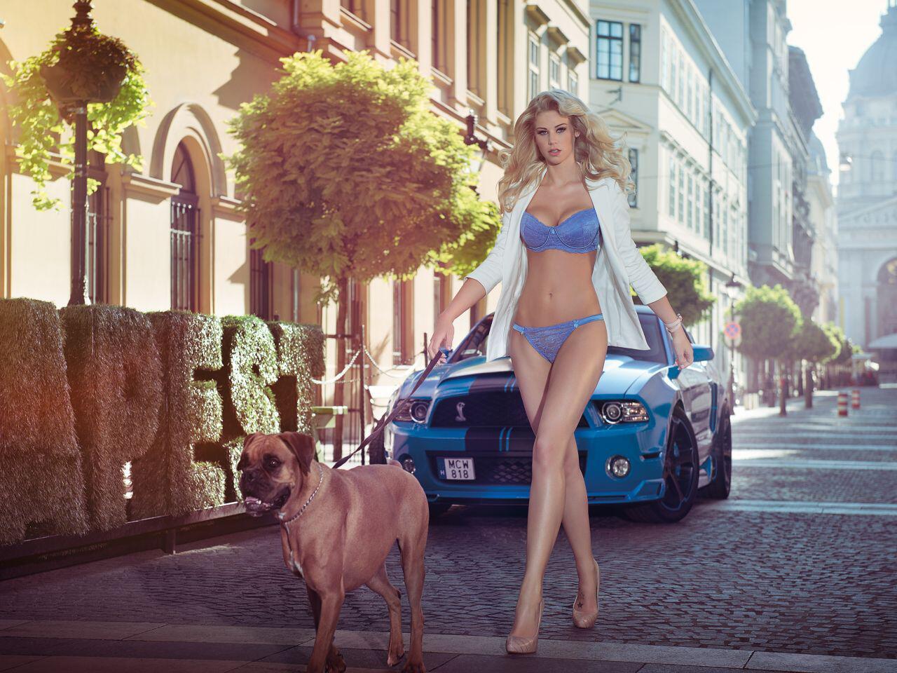 Bild zu Gassi gehen auf den Straßen von Budapest: Nicht nur der Hund ist begeistert