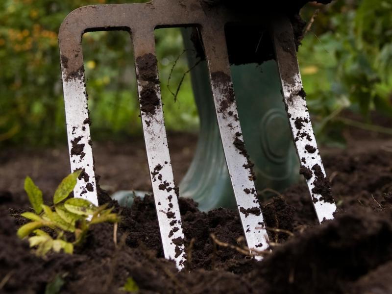 Bild zu Pflege des Gartenbodens