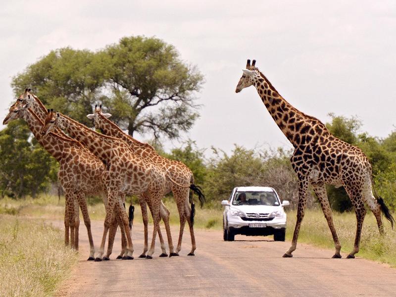 Bild zu Das etwas andere Verkehrshindernis