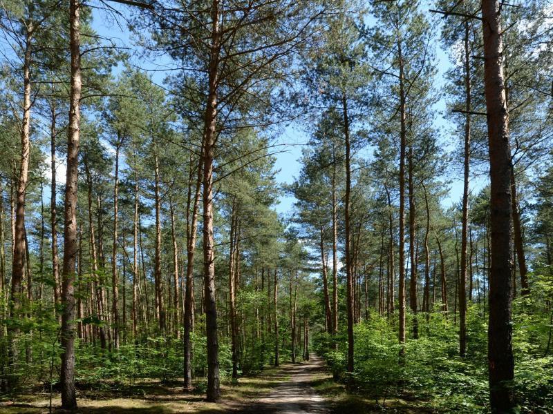 Bild zu Anlageobjekt Wald