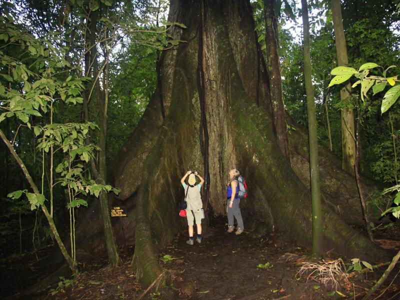 Bild zu Tropische Wälder Costa Ricas