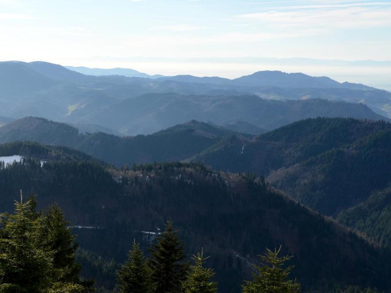 ... MTB Tour 4 - Trails durch die Weinstraße | Original Schwarzwald