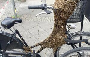 Bienen-Fahrrad