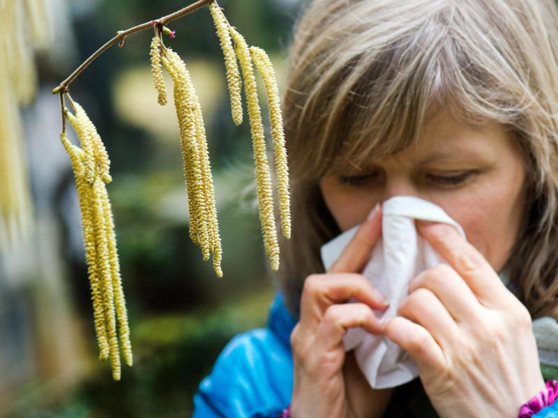 Bild zu Allergie gegen Haselpollen