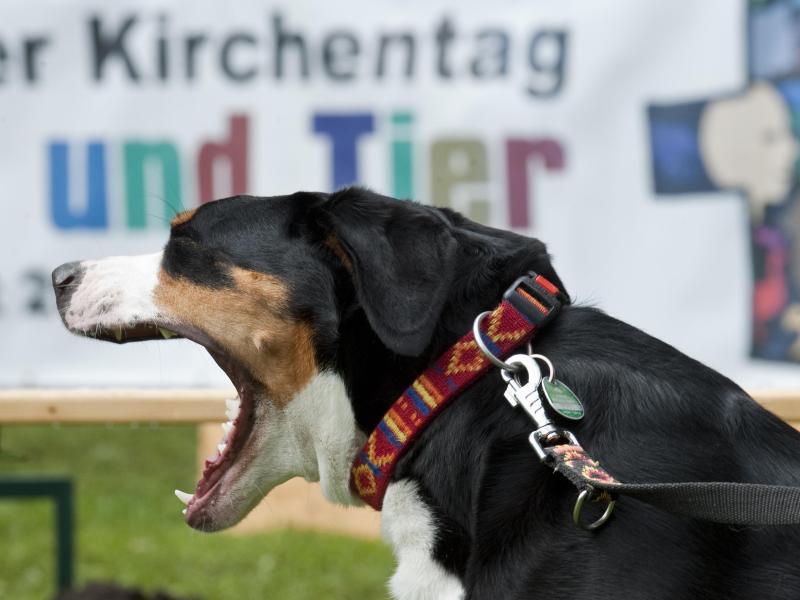 Bild zu Hilfe für den Hund