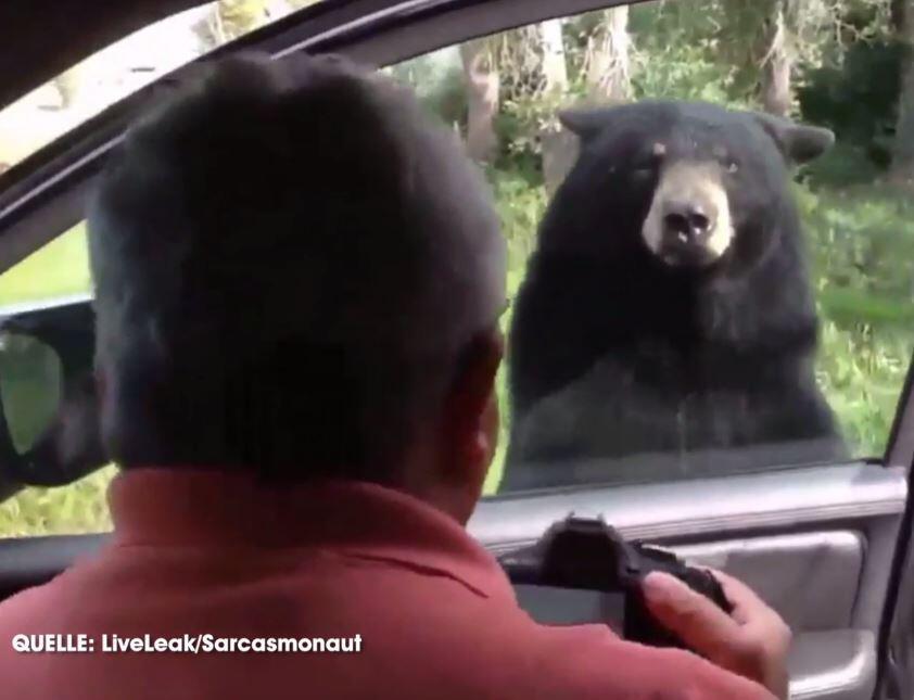 Bild zu Bär, Autotür