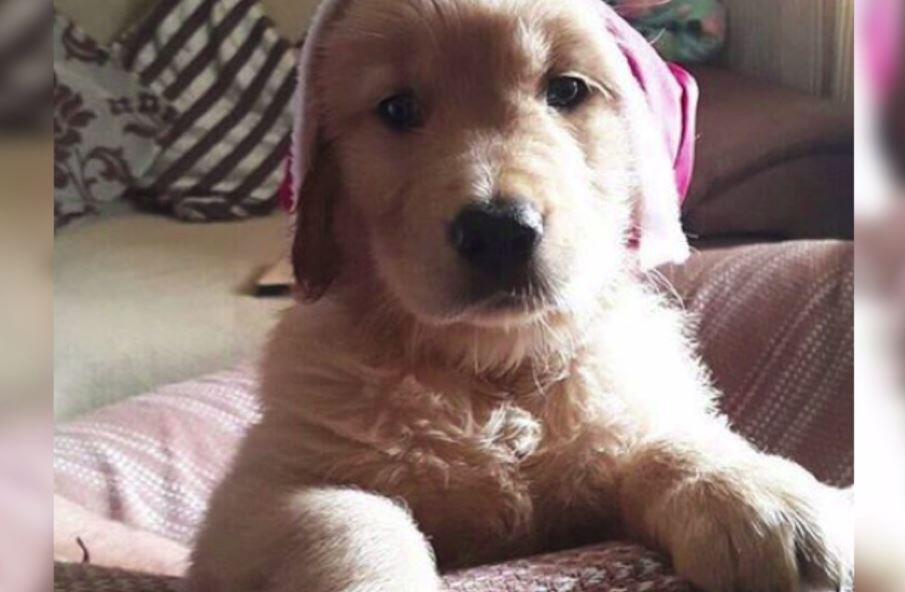 Bild zu Dieser Hund ist einfach nur süß.
