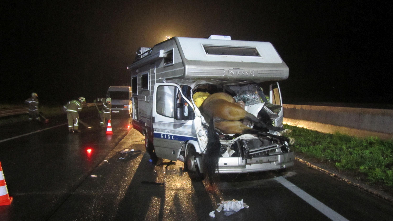 Bild zu Pferd, Unfall, Autobahn, Golling
