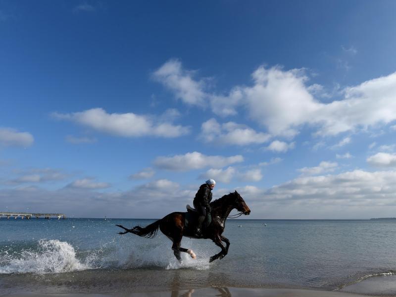 Bild zu Reiter am Ostseestrand