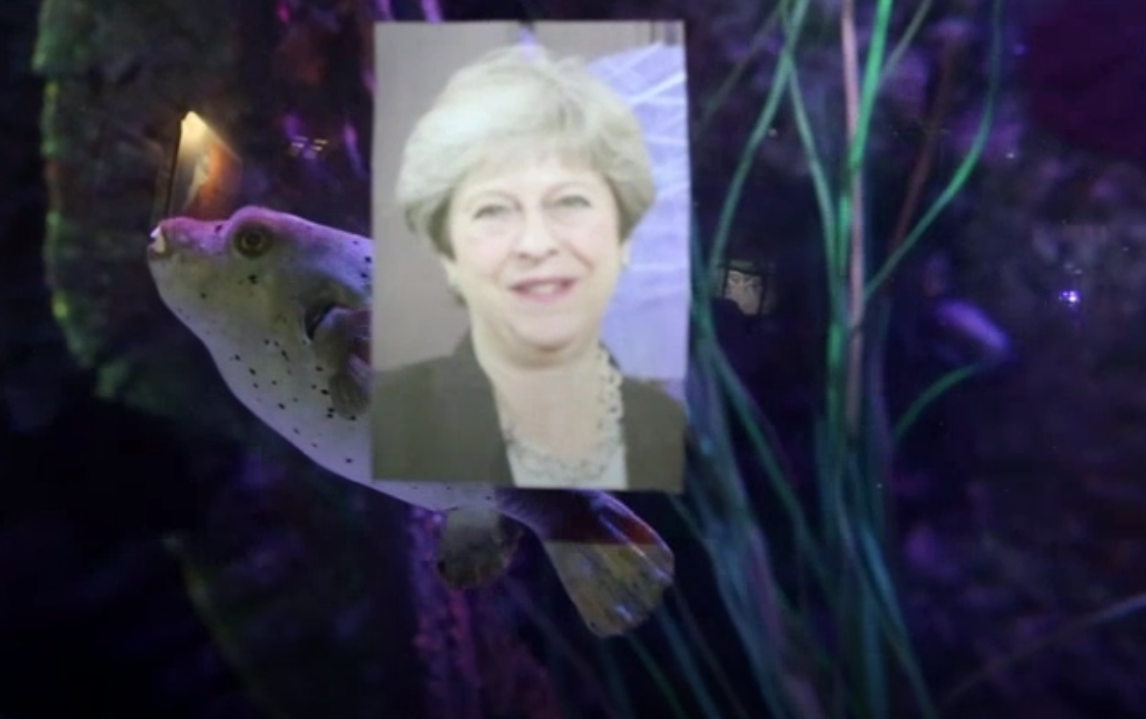 Bild zu Kugelfisch, Theresa May
