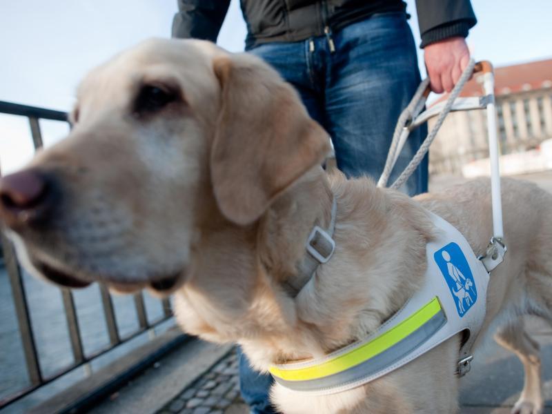 Bild zu Blindenhunde sind kostbare Begleiter