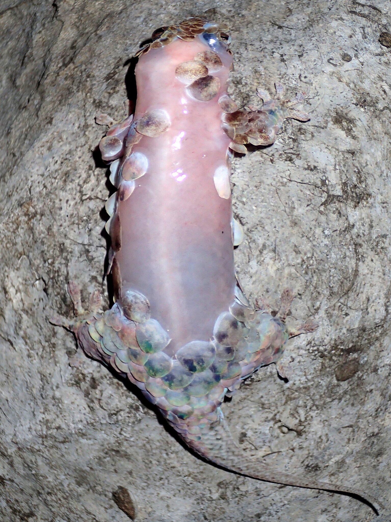 Bild zu Gecko