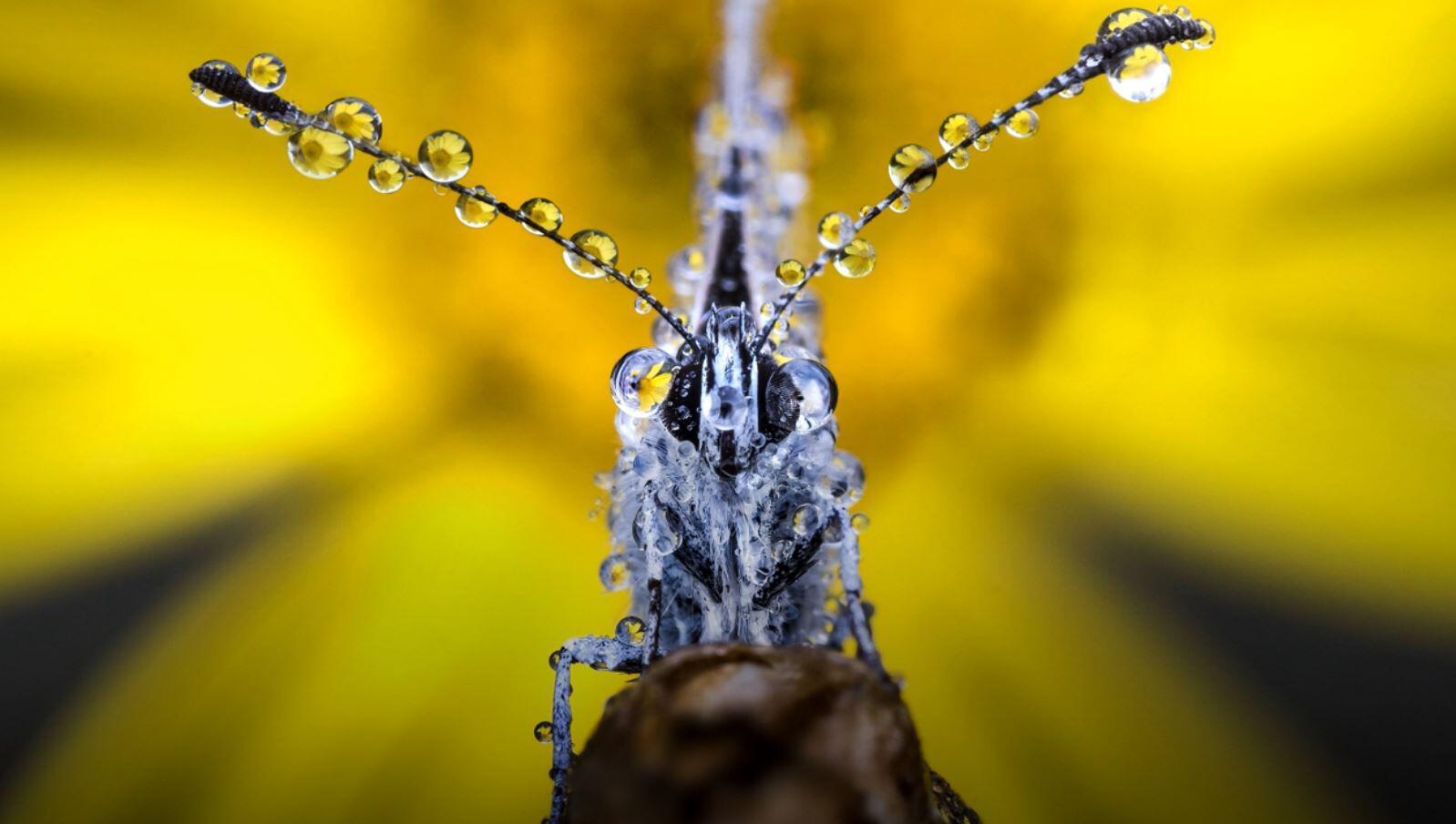 Bild zu Foto, Fotografie, Naturfoto, Insekten, Regen