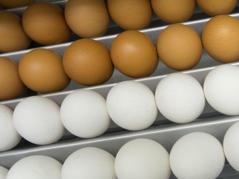 Bild zu Weiße Eier zum Färben