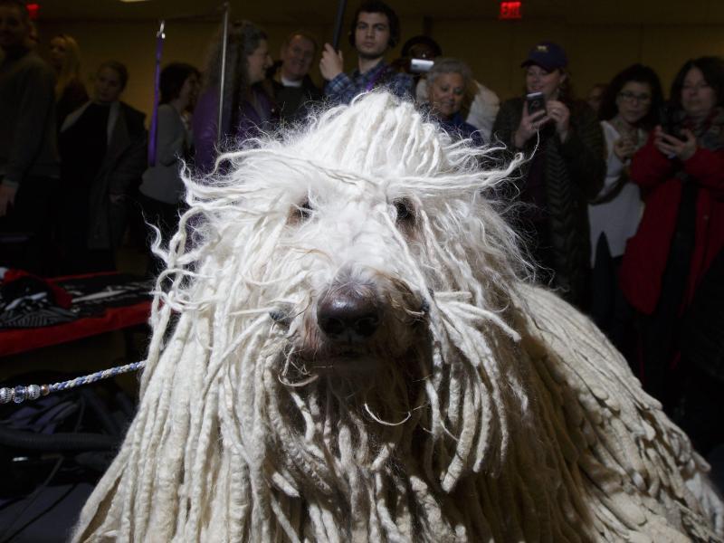 Bild zu Westminster Kennel Club Dog Show