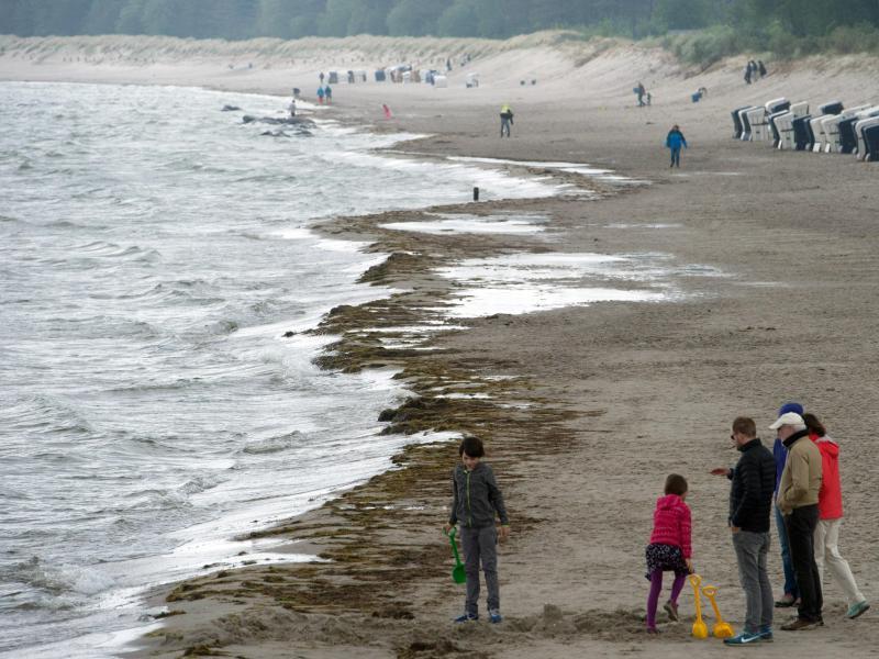 Bild zu Ostseestrand