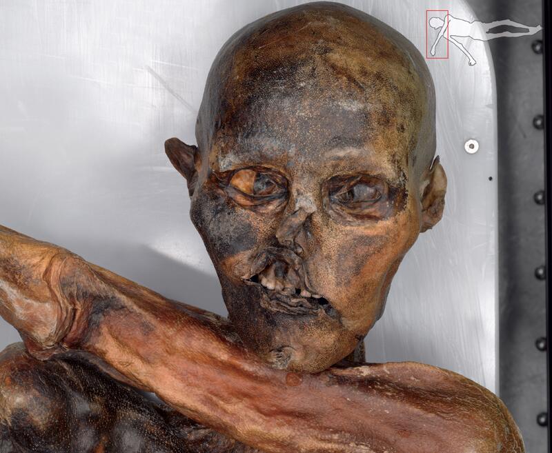 Bild zu Detailaufnahmen von Ötzi im Internet