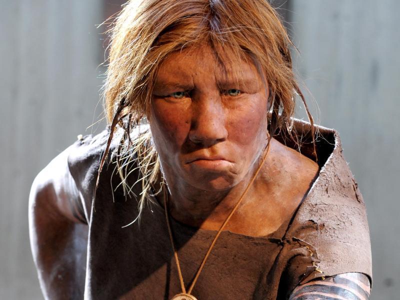 Bild zu Neandertaler