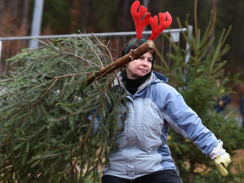 Bild zu Weltmeisterschaft im Weihnachtsbaumwerfen
