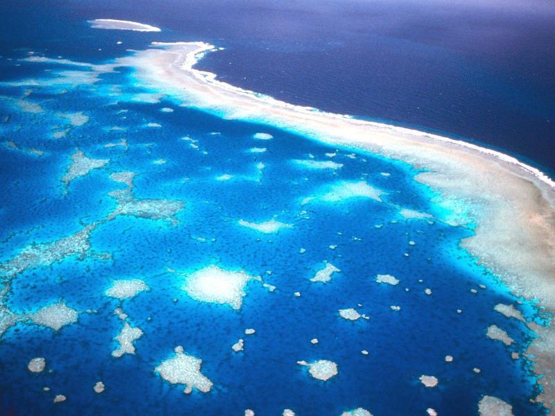 Bild zu Korallensterben