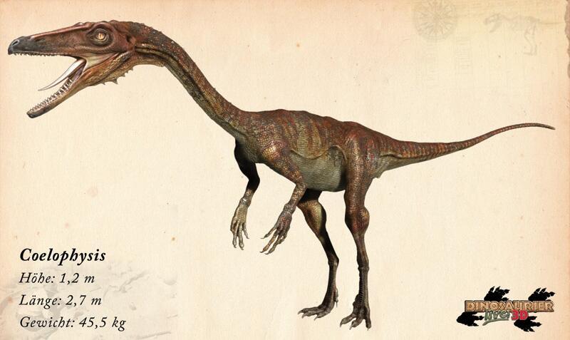 Bild zu Dinosaurier: Coelophysis