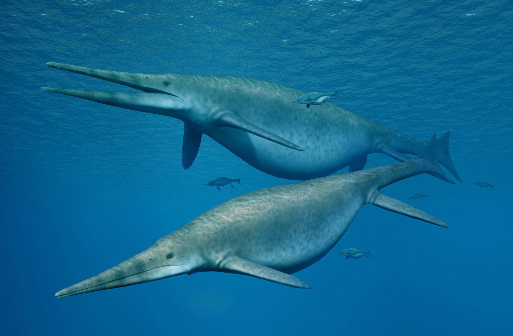 Bild zu Gigantische Fischsaurier