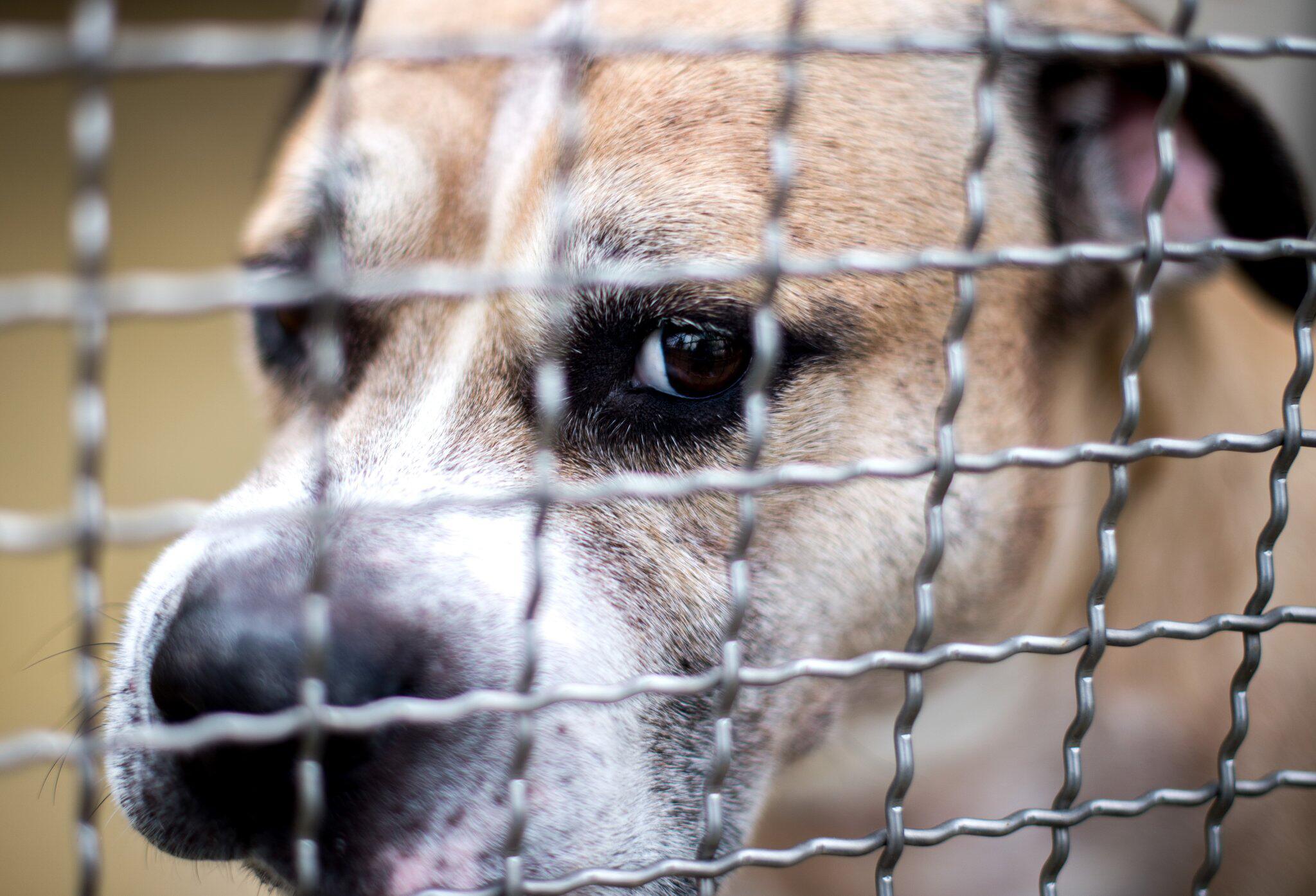Bild zu Hund «Chico» nach tödlicher Attacke eingeschläfert
