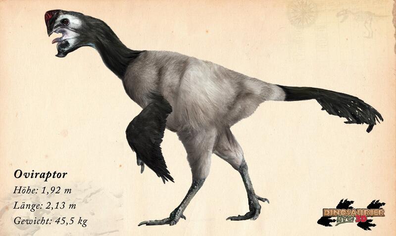 Bild zu Dinosaurier: Oviraptor