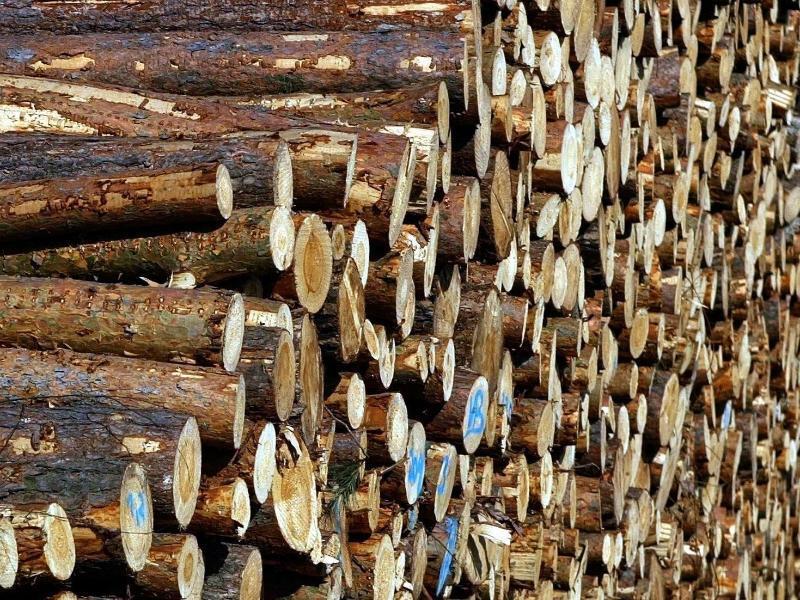 Bild zu Investitionen in Holz