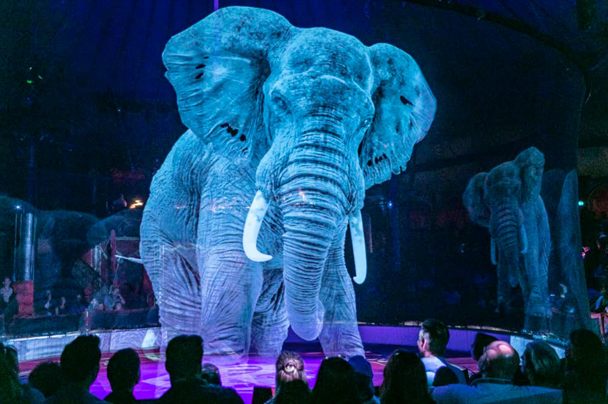 Bild zu Tier-Hologramm im Circus Roncalli