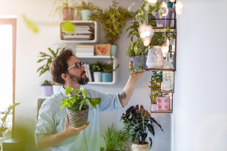 Bild zu urban, jungle, zuhause, verschönern, grün, pflanzen, wohntrend, hydrokultur, pflanzenlicht
