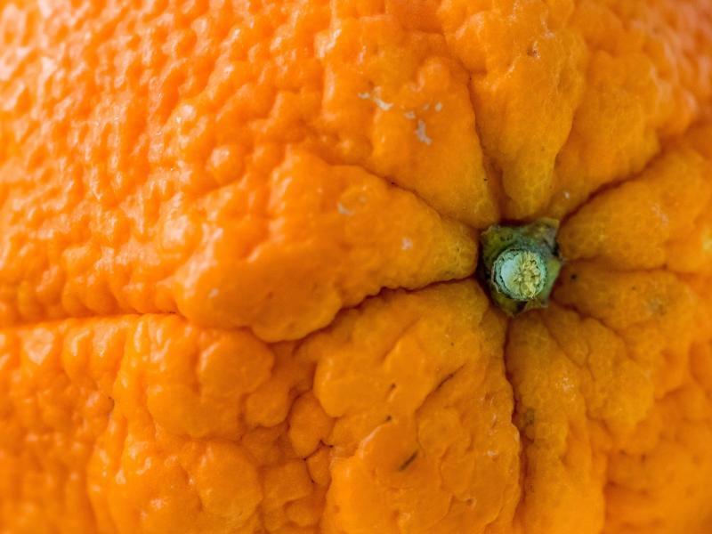 Bild zu Orange