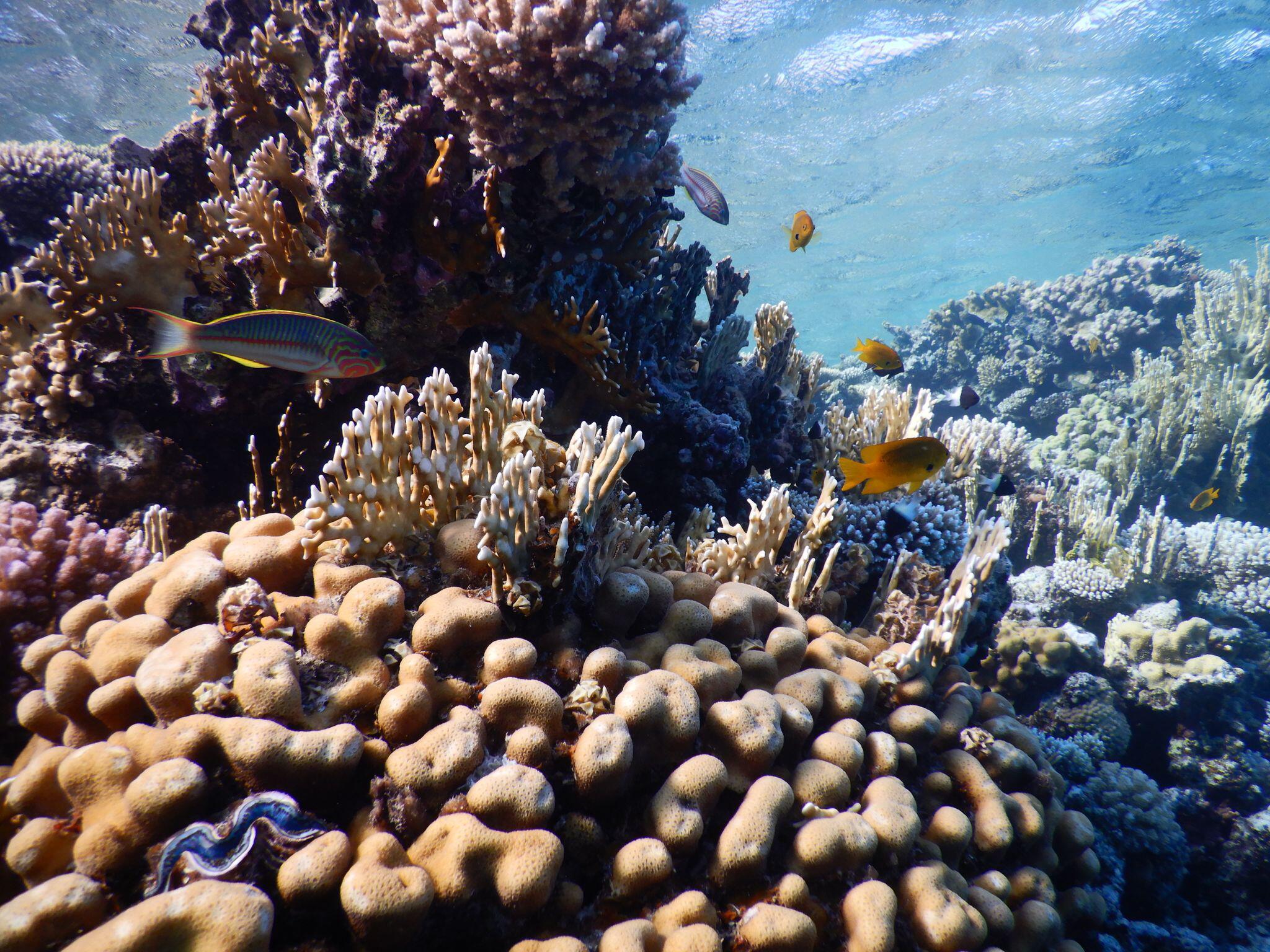Bild zu Drohende Ölpest im Roten Meer