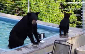 Bärenmama plantscht mit Kindern im Pool