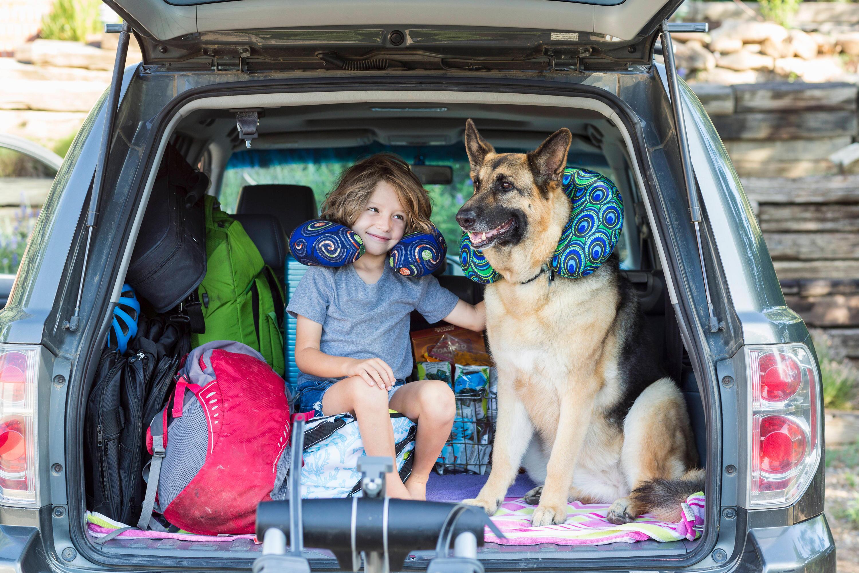 Bild zu Auto mit Kind und Hund