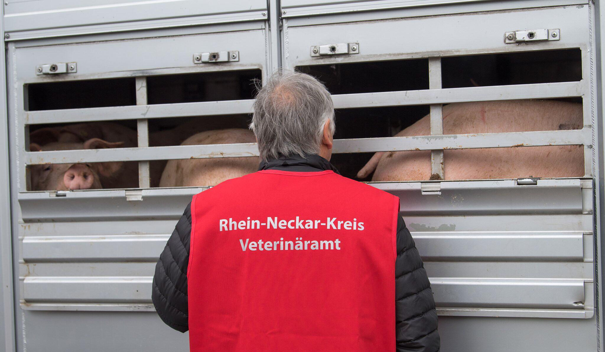 Bild zu Schwerpunktkontrolle Tiertransport